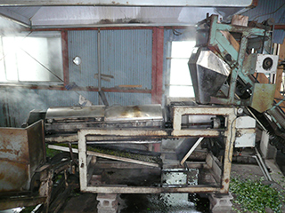 tea processing scenery4