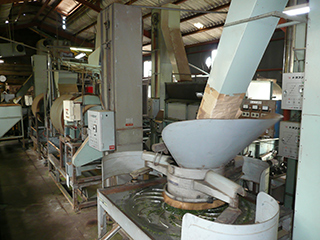 tea processing scenery8